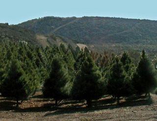 TreeFarmTrees