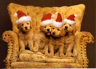 ChristmasPuppies