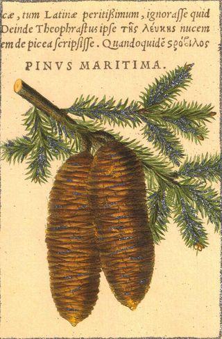PineconeSM
